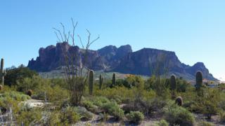 3600 aprox N Val Vista Road  , Apache Junction, AZ 85119 (MLS #5244889) :: The Carin Nguyen Team
