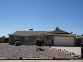 10822 N 47TH Avenue  , Glendale, AZ 85304 (MLS #5272826) :: Quantum of Arizona, REALTORS