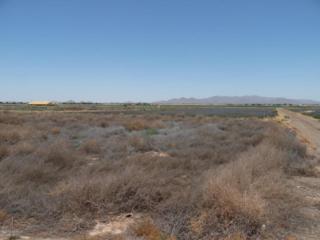 XXXX S 227TH Drive  , Buckeye, AZ 85326 (MLS #5303182) :: Carrington Real Estate Services