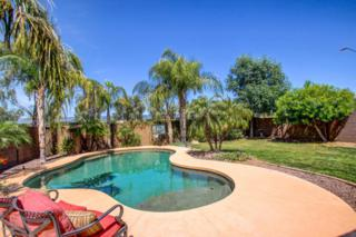 17062 W Saguaro Lane  , Surprise, AZ 85388 (MLS #5259234) :: Arizona Best Real Estate