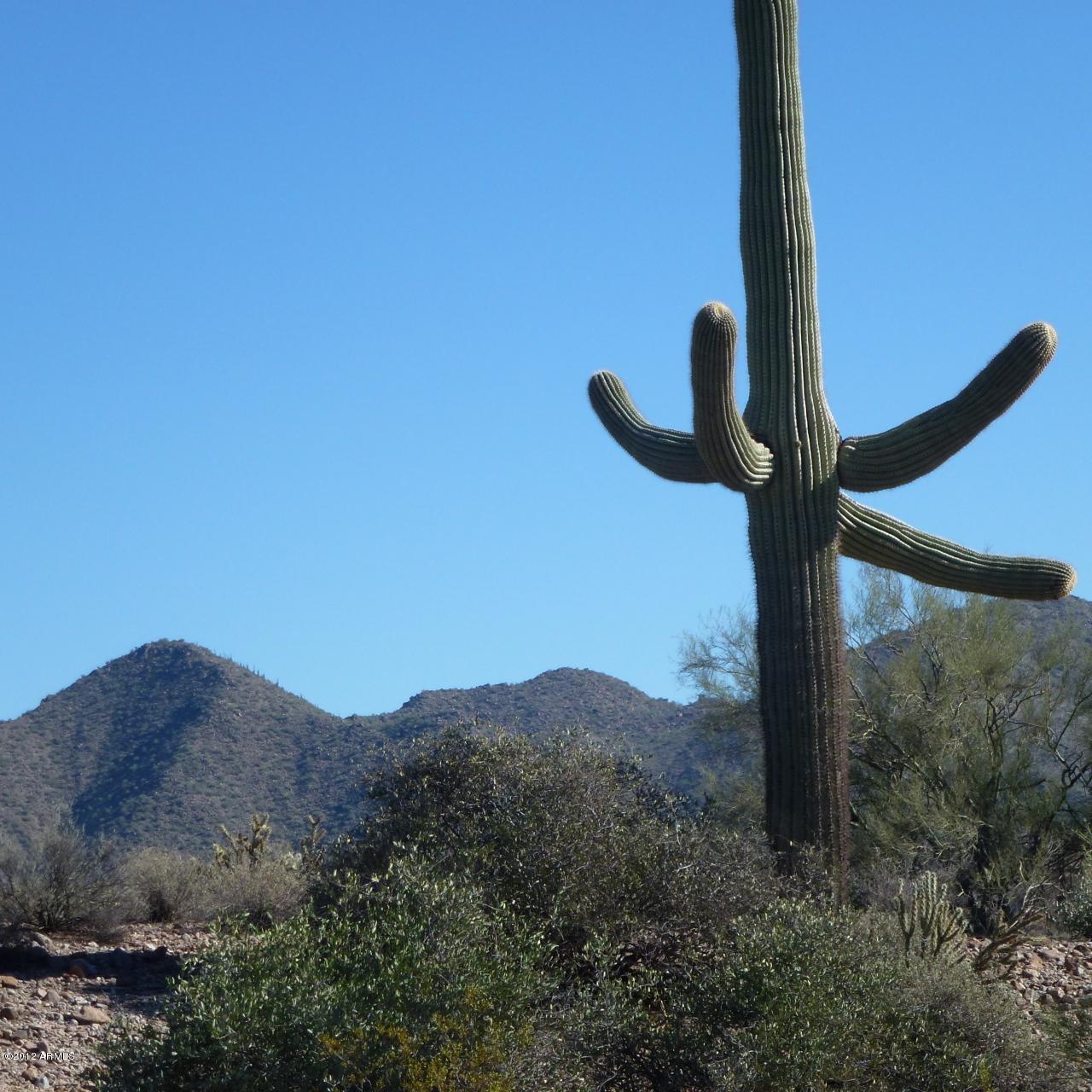 13XXX Blue Coyote Trail - Photo 1