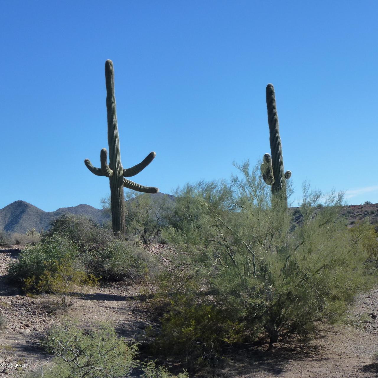 13XXX Blue Coyote Trail - Photo 9