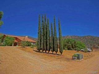 35640  Red Rover Mine Road  , Acton, CA 93510 (#SR14187877) :: Brian Melville – The Melville Team