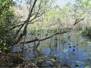 8874 W Orangetree  , Crystal River, FL 34428 (MLS #702330) :: Plantation Realty Inc.