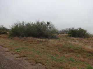 0  Blackhawk  , Sandia, TX 78383 (MLS #232951) :: Baxter Brooks Real Estate