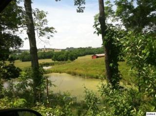 146 acres  Cedar Sprgs Valley  146+ Acres Ceda, Sevierville, TN 37876 (#193646) :: The Terrell Team