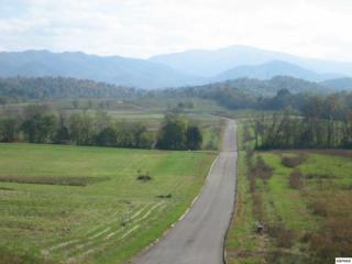 Lot 41  Secluded River Cir  1245 Secluded R, Newport, TN 37842 (#194720) :: The Terrell Team