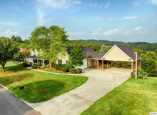 884  River Cliff Dr  , Kodak, TN 37764 (#190176) :: The Terrell Team
