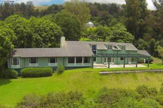 590  Hapapa Rd  , Kula, HI 96790 (MLS #361656) :: Elite Pacific Properties LLC