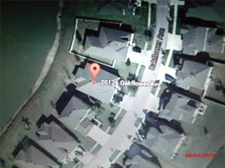 20126  Oakflower Avenue  , Tampa, FL 33647 (MLS #O5350413) :: The Duncan Duo & Associates