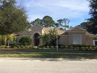 5117  Jewell Terrace  , Palm Harbor, FL 34685 (MLS #U7724303) :: The Lockhart Team