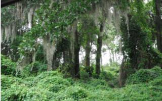 LOT 20  Lanceford Lane  , Fernandina Beach, FL 32034 (MLS #63719) :: Berkshire Hathaway HomeServices Chaplin Williams Realty
