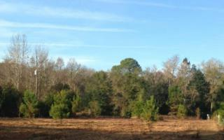 Bills Trail  , Yulee, FL 32097 (MLS #64565) :: Prudential Chaplin Williams Realty