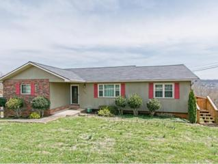 136  Lakeview Lane  , Gray, TN 37615 (MLS #346269) :: Jim Griffin Team
