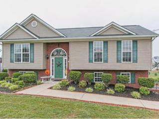 105  Butterfly Court  , Limestone, TN 37681 (MLS #349394) :: Jim Griffin Team