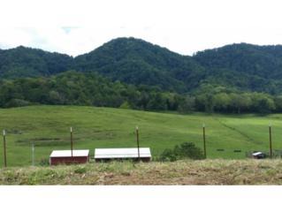0  Clinch Valley Road  , Sneedville, TN 37869 (MLS #353404) :: Jim Griffin Team
