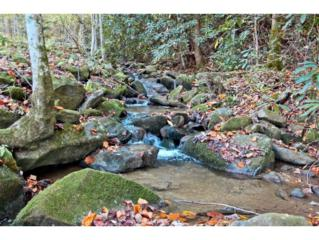 6.46 Ac  Trail Hollow Rd  , Cosby, TN 37722 (MLS #355202) :: Jim Griffin Team
