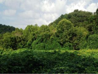0  War Creek Rd  , Thorn Hill, TN 37881 (MLS #355219) :: Jim Griffin Team
