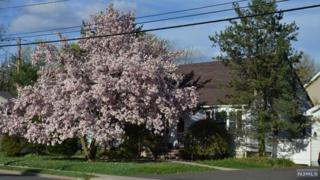 3  4th Ave  , Westwood, NJ 07675 (#1504279) :: Fortunato Campesi