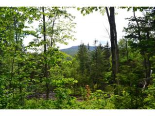 335 ac OFF  Welton Falls Rd  , Alexandria, NH 03222 (MLS #4418589) :: Carrington Real Estate Services