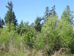 0 E Victor Rd (Lot 9 Survey 5/31)  , Belfair, WA 98528 (#751392) :: Priority One Realty Inc.
