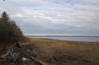 736  Duck Lake Dr NE , Ocean Shores, WA 98569 (#719161) :: Home4investment Real Estate Team