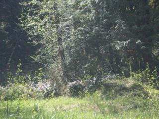 111  Bear Trap Blvd  , Shelton, WA 98584 (#720414) :: Home4investment Real Estate Team