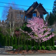 2448  30th Ave W , Seattle, WA 98199 (#727387) :: FreeWashingtonSearch.com