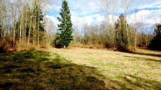6  Thomas Creek Dr  , Sedro Woolley, WA 98284 (#758648) :: Home4investment Real Estate Team