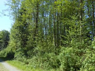 0-NHN  Prevedal Rd  , Sedro Woolley, WA 98284 (#781482) :: Home4investment Real Estate Team