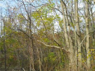 252 & 253  Eckles  , Lower Burrell, PA 15068 (MLS #1041736) :: Keller Williams Pittsburgh