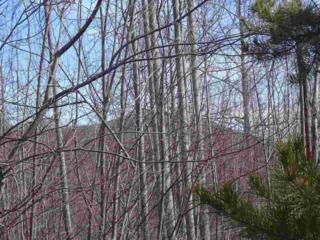 Lot # 216  Cherry Hill (Bright's Creek)  , Mill Spring, NC 28756 (MLS #41834) :: Washburn Real Estate