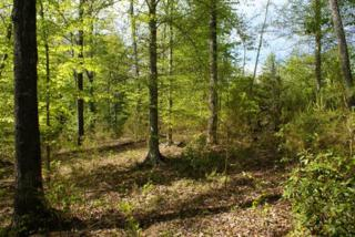 Clearwater Pkwy  , Rutherfordton, NC 28139 (MLS #42058) :: Washburn Real Estate