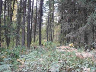 Lot 20  West Branch Paradise  , Newport, WA 99156 (#201426334) :: The Synergy Group