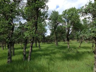 10 Acres  Bass Pond Rd.  , Millville, CA 96062 (#15-1453) :: Cory Meyer Home Selling Team