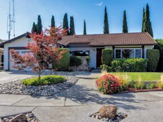 511  Mccollam Dr  , San Jose, CA 95127 (#ML81425826) :: Brett Jennings | KW Los Gatos Estates