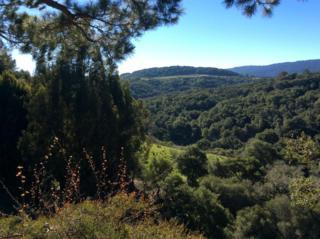 Brittan  , San Carlos, CA 94070 (#ML81448656) :: RE/MAX Real Estate Services