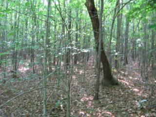 Rollins Mill Road  , Holly Springs, NC 27540 (#1613917) :: Fathom Realty