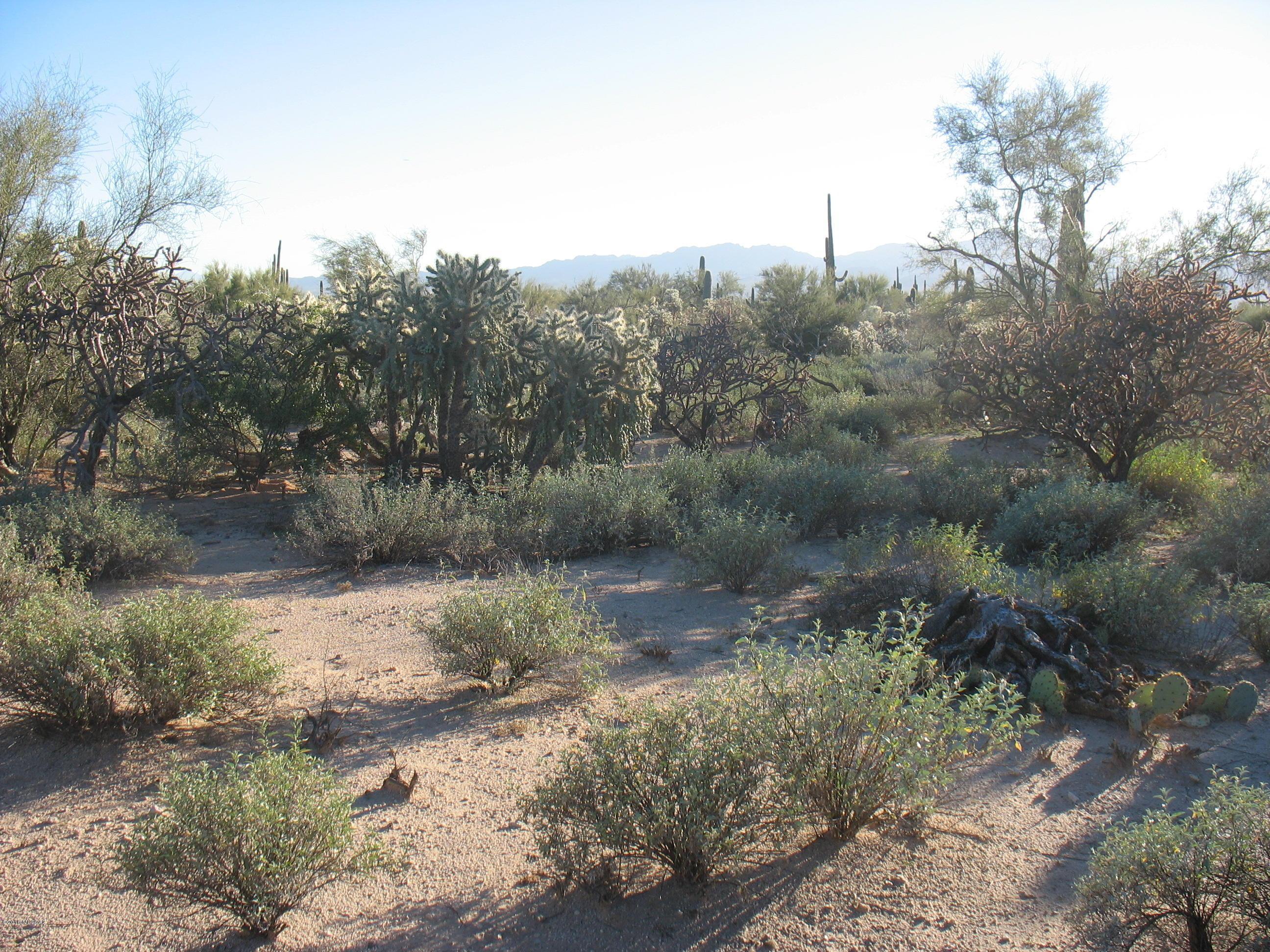 W Desert Falcon Lane
